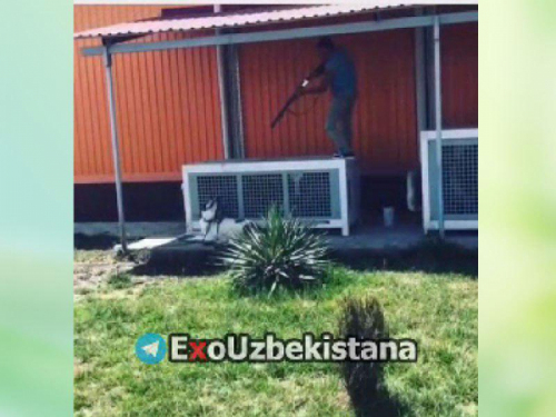 По факту жестокой расправы над животным, снятой на видео и выложенной в социальных сетях, ГУВД Ташкента провело проверку, сообщили в среду в ведомстве.
