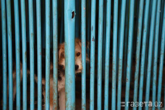 Отряд по отлову бродячих животных не стерилизует, не прививает и не кормит отловленных собак и кошек. В чем заключается функция «отловки» и может ли она работать лучше, разбиралась Сабина Бакаева.
