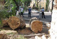 Планируется ввести мораторий на вырубку всех деревьев