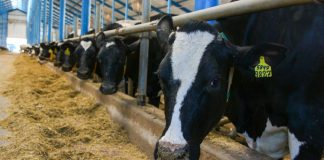 В Казахстане могут ввести запрет на вывоз скота за рубеж