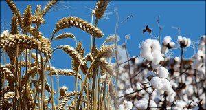 В Узбекистане упразднят госзаказ на хлопок и пшеницу