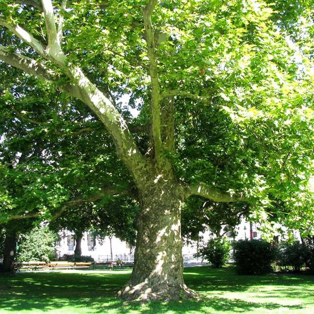 Экопартия попросила правительство ввести временный мораторий на вырубку деревьев