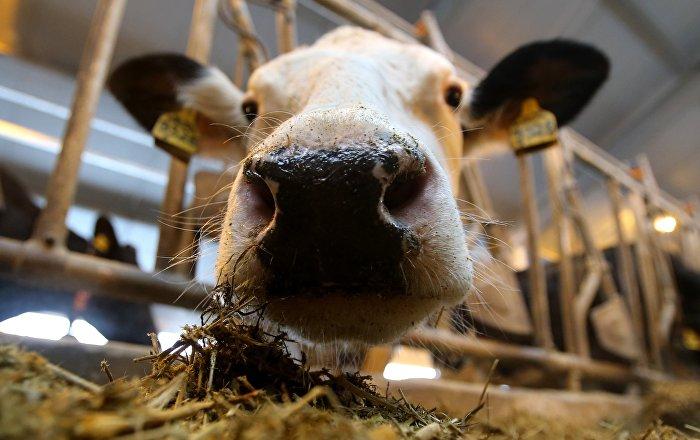Украина готова покрыть дефицит импорта мяса в Узбекистане
