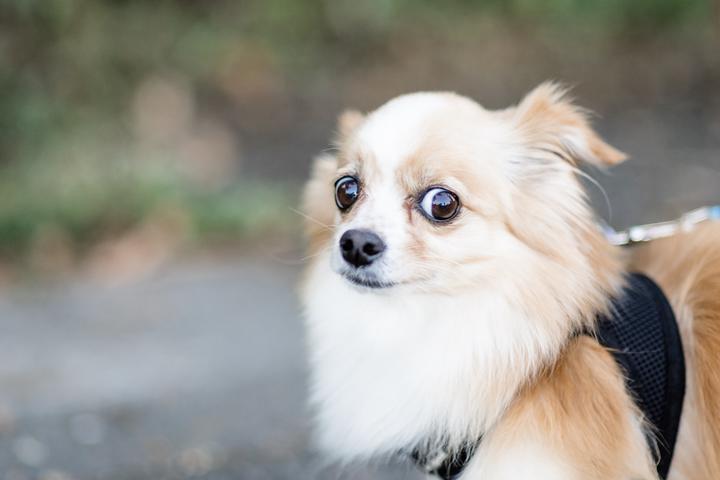 В Гонконге выявили случай передачи коронавируса от человека к животному